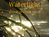 Waterlight - portrait of a chalk stream